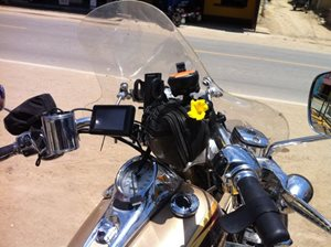 Flower-on-Brad-s-bike-from-a-well-wisher-along-the-road-(1)